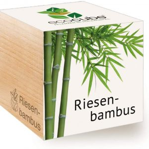 Feel Green Ecocube Giant Bamboo Sustainable Gift Idea